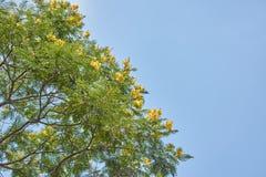 Albero con i fiori ed il cielo blu gialli delle foglie verdi immagine stock libera da diritti