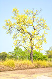 Albero con i fiori gialli Immagini Stock Libere da Diritti