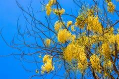 Albero con i fiori gialli contro il cielo fotografia stock
