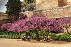 Albero con i fiori porpora a Alhambra Fotografie Stock Libere da Diritti