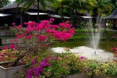 Albero con i fiori porpora sui precedenti della fontana Immagine Stock Libera da Diritti