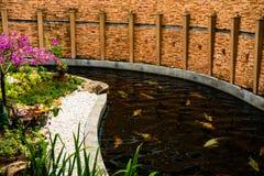 Albero con i fiori sui precedenti della corrente con il pesce cinese Fotografie Stock Libere da Diritti
