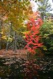 Albero con i fogli di autunno Fotografia Stock