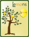 Albero con i limoni Fotografia Stock