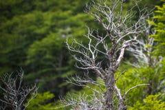 Albero con i rami contro un fondo di pianta e delle gocce di pioggia Shevelev Fotografie Stock Libere da Diritti