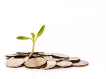 Albero con i soldi della moneta isolati su fondo bianco Immagine Stock Libera da Diritti