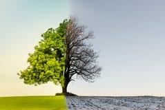Albero con il cambiamento di stagione o di clima fotografia stock