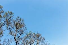 Albero con il cielo Fotografie Stock