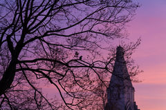 Albero con il corvo Fotografia Stock Libera da Diritti