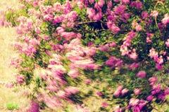 Albero con il fiore rosa Immagini Stock