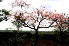 Albero con il fiore rosso immagine stock