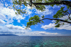 Albero con il fondo del cielo blu e del mare Immagine Stock Libera da Diritti