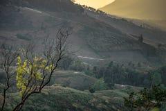 Albero con il fondo della montagna Immagine Stock