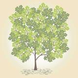 Albero con il leafage verde Fotografia Stock