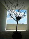 Albero con il nido degli uccelli Fotografia Stock Libera da Diritti