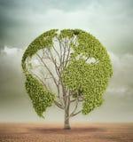 Albero con il programma di mondo in un deserto Fotografia Stock Libera da Diritti