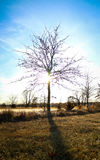 Albero con il sole Immagini Stock