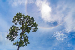 Albero con il sole di alone Fotografia Stock Libera da Diritti