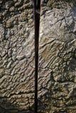 Albero con il taglio del centro Fotografie Stock Libere da Diritti