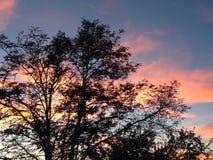 Albero con il tramonto nel fondo Fotografia Stock