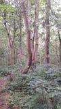 Albero con il tronco che cresce in tre pezzi Fotografia Stock