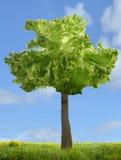 Albero con insalata royalty free stock photo