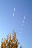 Albero con l'aeroplano Fotografie Stock Libere da Diritti