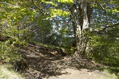 Albero con l'ombra Fotografia Stock