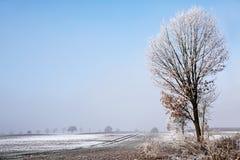 Albero con la brina sui rami nudi ad un ampio campo nevoso, bianco fotografia stock