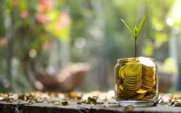 Albero con la crescita sul porcellino salvadanaio di vetro dal mucchio di oro fotografie stock