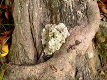 Albero con la grande radice Fotografia Stock