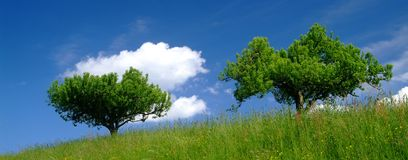 Albero con la nube Immagini Stock Libere da Diritti