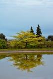 Albero con la riflessione nell'acqua ai giardini di Royal Palace di Laeken Fotografia Stock