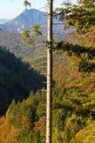 Albero con le filiali e la vista rotte delle alpi immagini stock libere da diritti