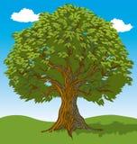Albero con le foglie Fotografia Stock Libera da Diritti