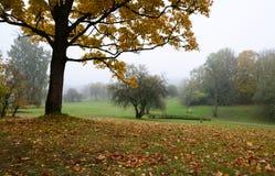 Albero con le foglie dorate Fotografia Stock