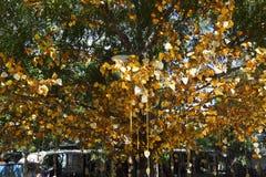 Albero con le foglie dorate Immagini Stock Libere da Diritti