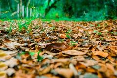 Albero con le foglie multicolori nei campi immagine stock