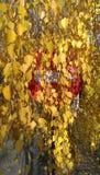 Albero con le foglie, segnale stradale di autunno rosso Fotografia Stock