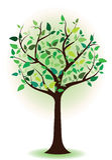Albero con le foglie verdi. Albero della sorgente. albero di estate Immagine Stock