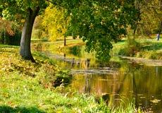 Albero con le foglie verdi vicino all'acqua, Fotografie Stock Libere da Diritti