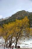 Albero con le giovani foglie, montagna, neve Fotografia Stock Libera da Diritti