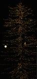 Albero con le luci e la luna piena Fotografia Stock