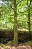 Albero con muschio nella foresta Fotografie Stock