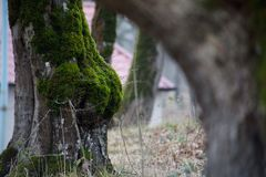 albero con muschio sulle radici in una foresta verde o muschio sul tronco di albero Corteccia di albero con muschio verde Natura  Immagine Stock Libera da Diritti