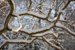 Albero con neve Fotografie Stock
