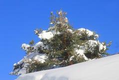 Albero con neve in montagna Fotografia Stock Libera da Diritti