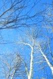 Albero con neve sotto cielo blu fotografia stock libera da diritti