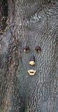 Albero con un fronte Fotografia Stock