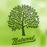 Albero con una corona rotonda - ecologia, naturale Fotografie Stock Libere da Diritti